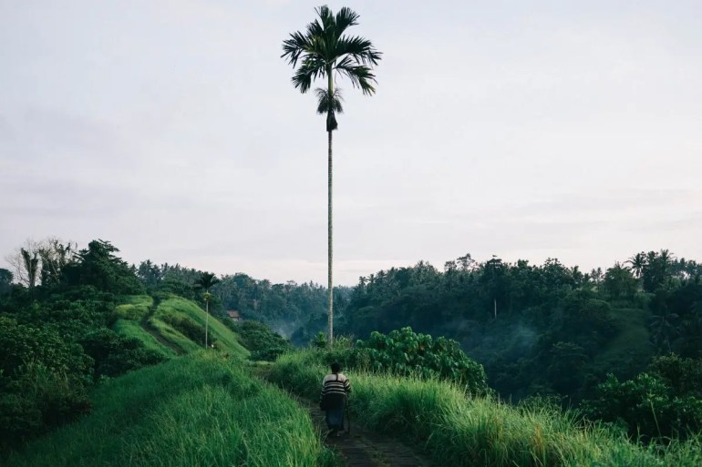 How to Spend a Day in Ubud, Bali