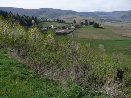 domaine Guignier