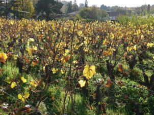Fred Lailler domaine Brégeon jeune vigneron du Muscadet