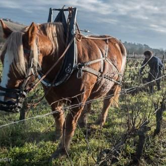 labour des vignes au cheval