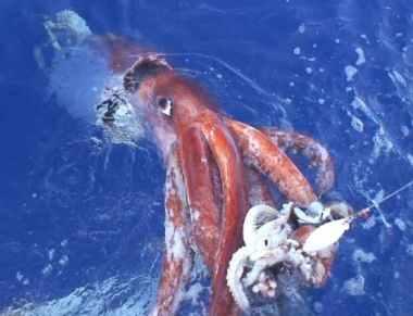 A Rare Giant Squid Caught on Camera Near Japan's Coast