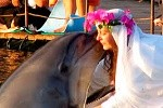 woman married Dolphin