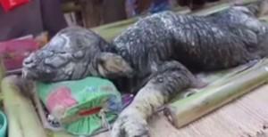 WEIRD Creature Found in Thailand 1