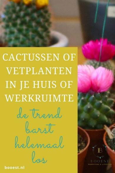 Cactussen en vetplanten in je huis of werkruimte, de trend barst helemaal los