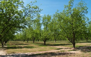Be thankful if you still live in a place where this happens pecan trees dianna booher