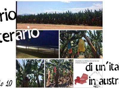 Diario letterario di un'italiana in Australia: Capitolo 10 – Banane Banane Banane