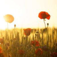 La poesia della settimana: Sarà Estate di Emily Dickens
