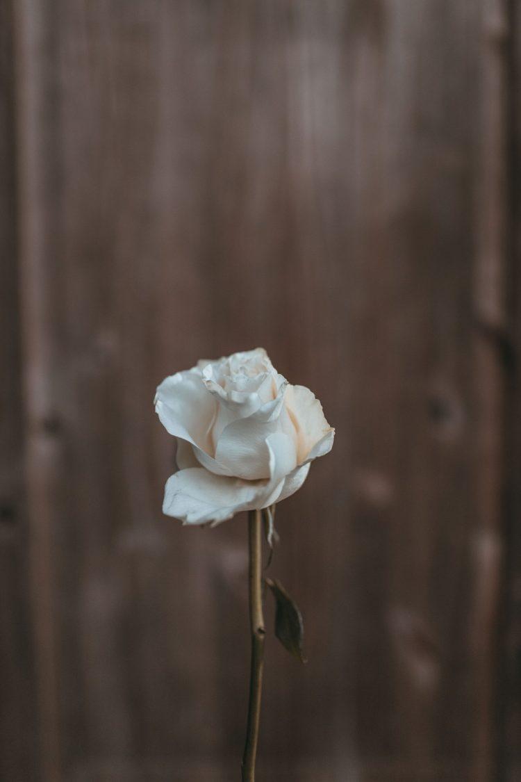 Coltivo la rosa bianca poesia di José Martí