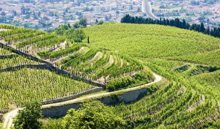 Auvergne Rhone Alpes Terraced Vine Yards