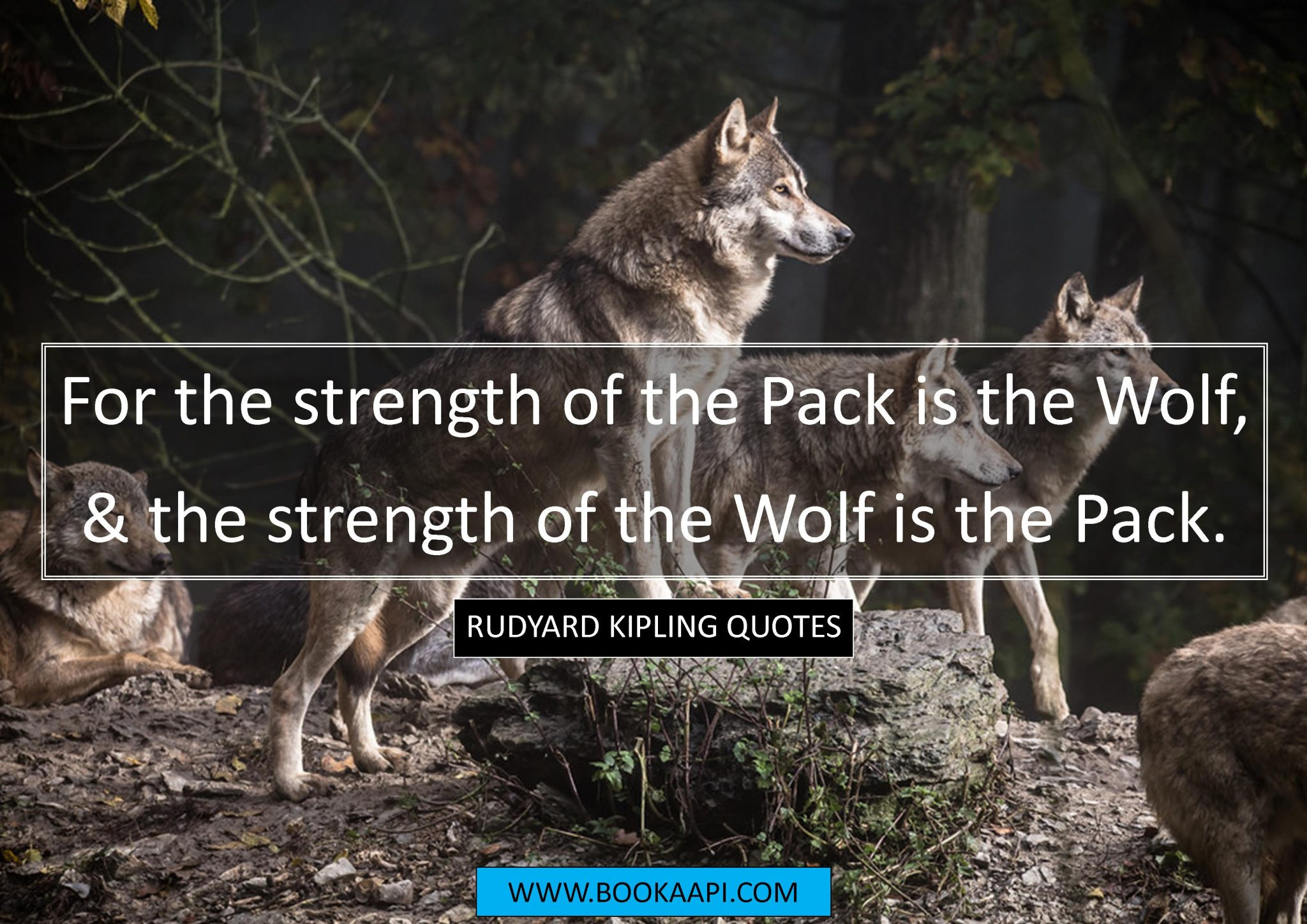 Jungle Book Quotes Mesmerizing 9 Amazing Rudyard Kipling Quotes From The Jungle Book