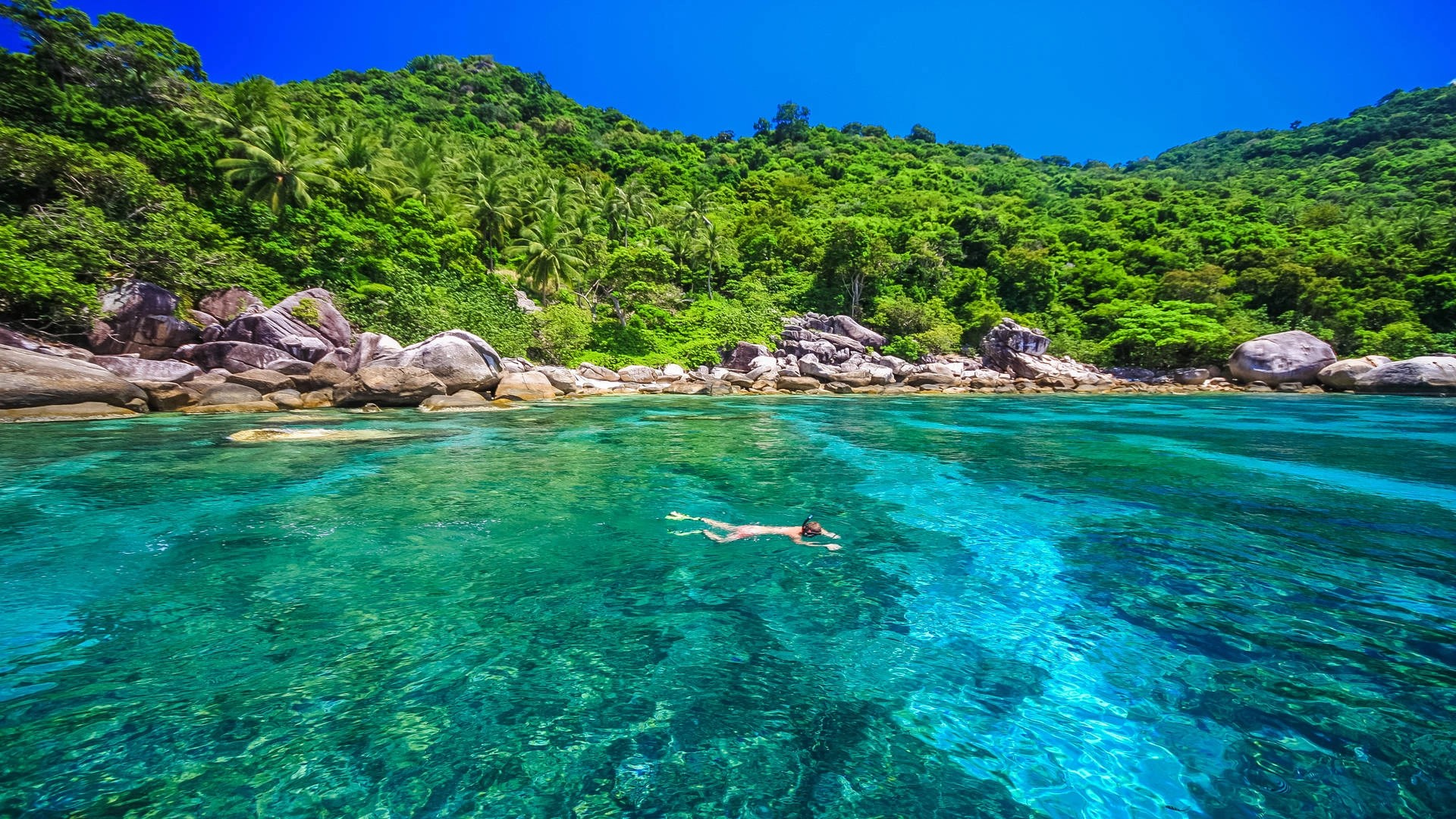 Diving in Koh Tao: A scuba guide to Turtle Island