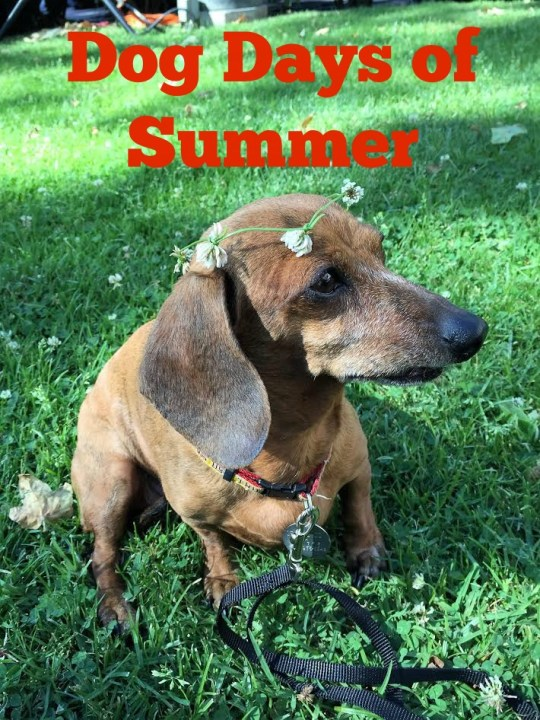 dog days of summer