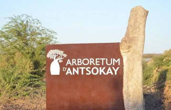 Arboretum d'Antsokay Toliara : un très joli condensé de la flore du Sud de Madagascar!