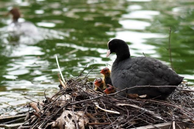 con mamma e papa al lago