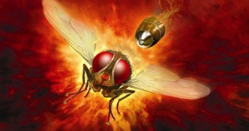 Makkhi - Die Rache der Fliege - Filmsheet © Rapid Eye Movies