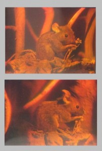 Hologram of a mouse from different angles.