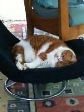 Mutzi takes a nap.