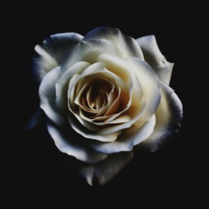 """""""After my death, I will let fall a shower of roses. I will spend my heaven doing good upon earth."""" Many have sought her aid and been answered. Not only with a resolution of their trial, but also with a literal rose! Read on for more ways St. Thérèse can help you."""
