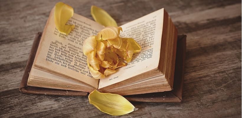 bibliofil-z-zycia-ksiazkoholika