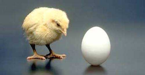 chicken_or_egg