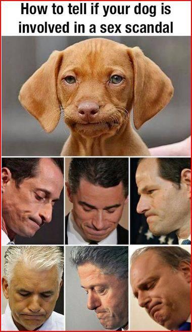 Dog involved in sex scandal