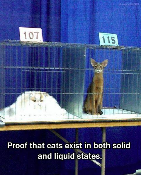 Proof that cats are solid and liquid