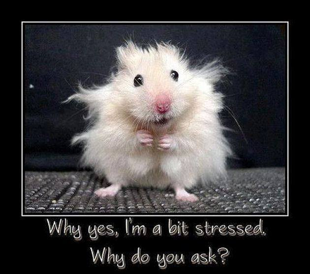 Why yes I am a bit stressed