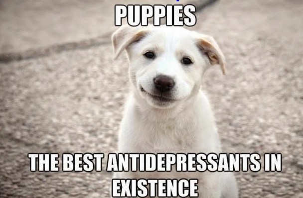Puppies are the best antidepressant