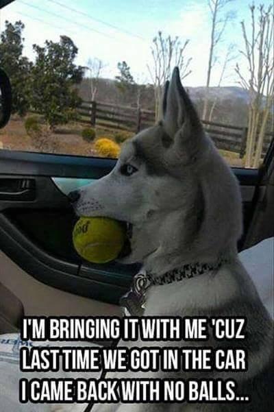 Dog no balls