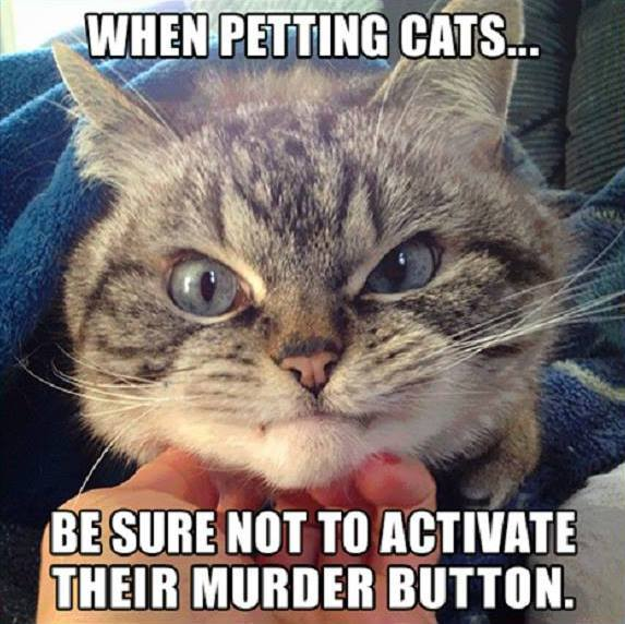 Cat murder button