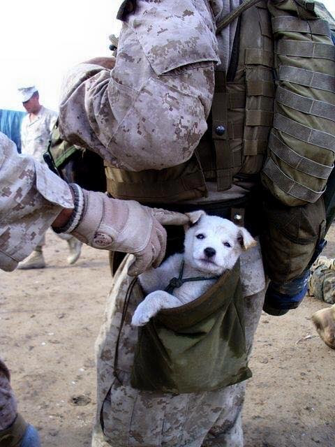 Troops and dogs 19