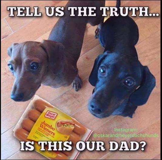silly-dachshunds-and-oscar-mayer