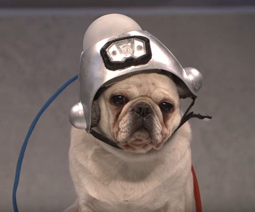 SNL Dog Trump sketch