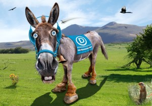 Support Democrats Donkey Democrat Party