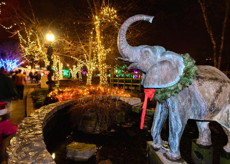 Zoo Lights Dates