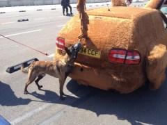 Dog v Sniffer Dog