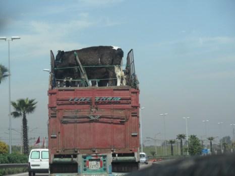 124 Morocco Convoy #10