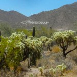 GET A JUMP START ON GLOBAL WARMING IN THE ARIZONA DESERT