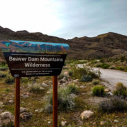 beaver dam mountains wilderness
