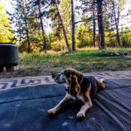 wallowa-whitman national forest camping dog