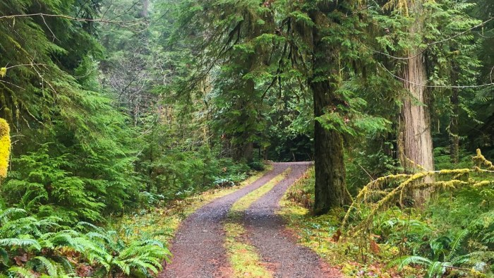 campbell tree grove campground, olympic national forest