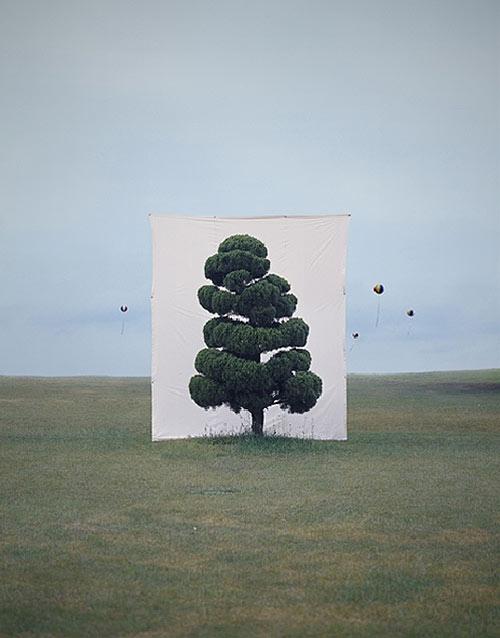 myoung ho lee photographer photography tree backdrop