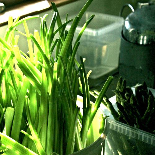 celery-asparagus-forest