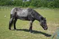 Redwings Horse Sanctuary C