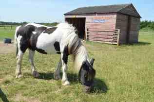 Redwings Horse Sanctuary D