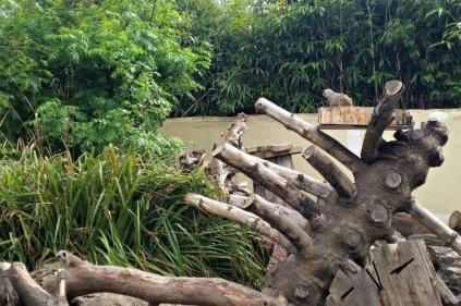 Drayton Manor Zoo Meerkats