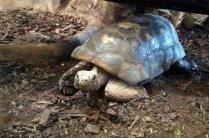 Drayton Manor Zoo Tortoise