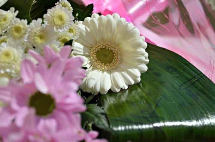 Flora Queen Purple Haze - White Gerbera