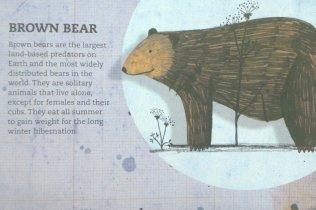 Animal Doctors - Brown Bear