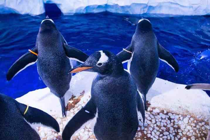 SLLA_New_Penguins15